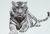 Punkte-Tiger